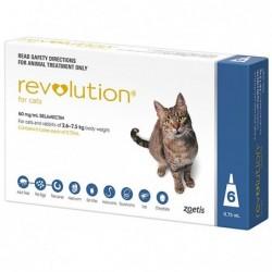 Revolution Cats 6s